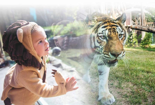Experience A Truly Unique Halloween at Boo at the Zoo