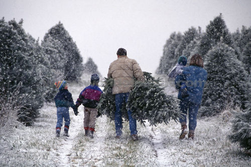 Celebrate Christmas By Cutting Down Your Own Christmas Tree in ...