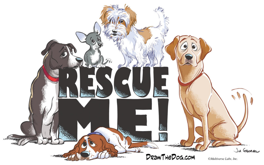 Announcing a Community Drive to Help Rescue Animals