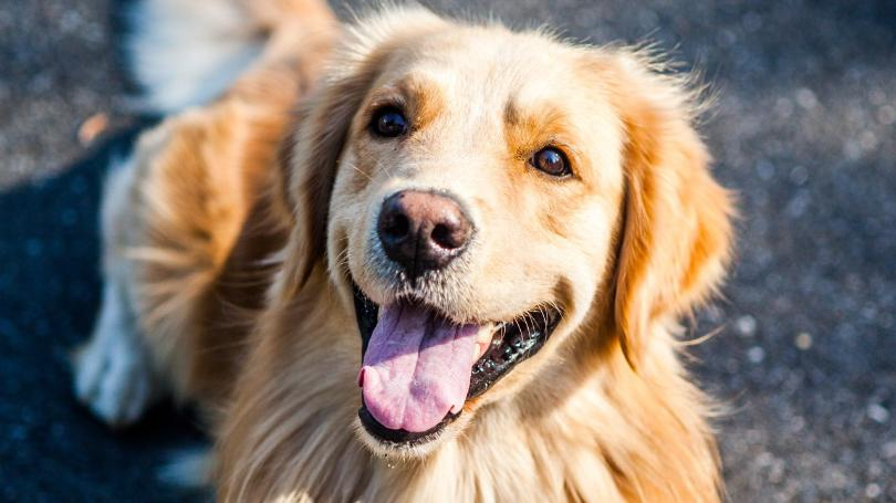 Pet-Friendly Stores & Parks in Colorado Springs - Monica Shea
